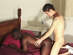 Swine schlong intrudes ebony hole