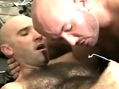 Bear gays sperm by turns on hairy belly