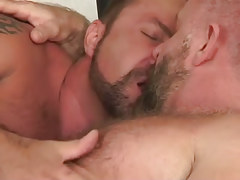 Two bear daddies lick in bed